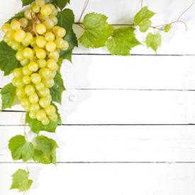 Bijelo stolno grožđe bez sjemenki Picurka